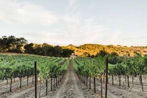 Warnecke Ranch and Vineyard is located in Healdsburg. Alice Warnecke Sutro, artist, wine producer and founder of SUTRO Wine Co., has led hikes throughout her family's ranch since 2017. Hikes end with a wine tasting.