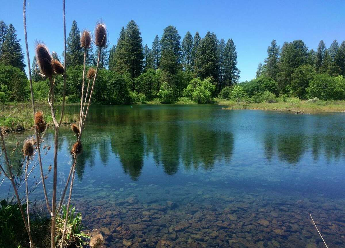 A view at Ahjumawi Lava Springs State Park in Shasta County.