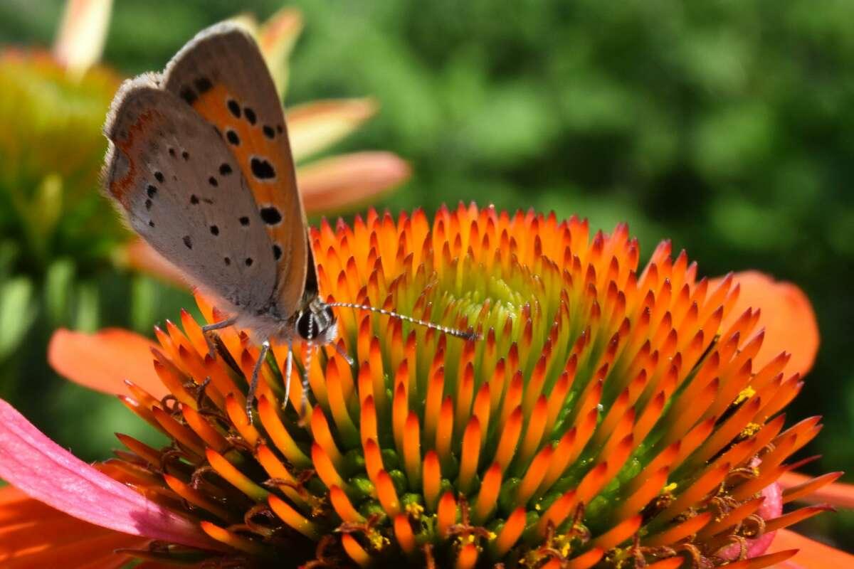"Jack Bulmer of Brunswick entitles this photo simply ""Pollinator."""