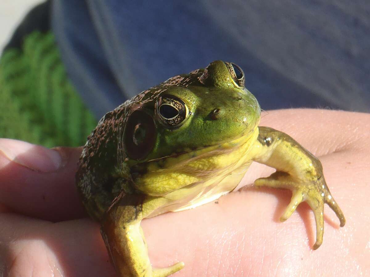Kids Nature Art: Amphibians is set for August 12 at Chippewa Nature Center.