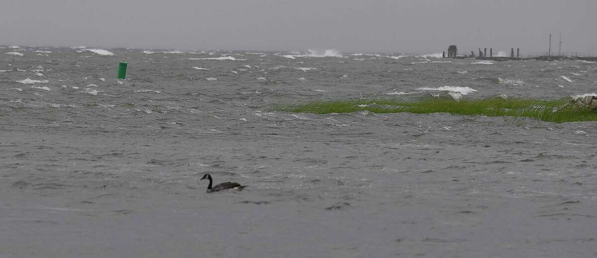 A duck paddles its way in high waters coming ashore at the Cove Island Marina as Tropical Storm Isaias passes through on August 4, 2020 in Stamford, Connecticut. The first tropical storm of the 2021 season is expected to hit Friday.