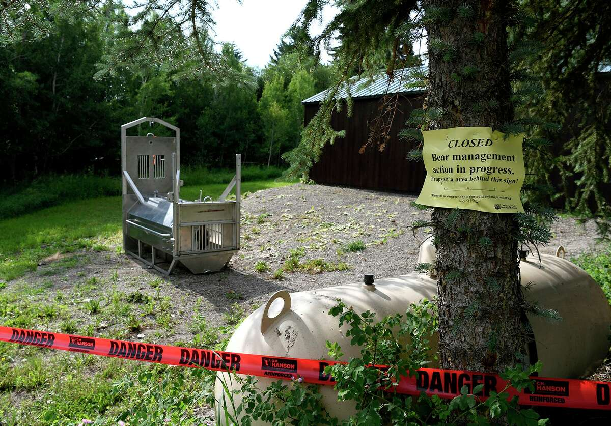A bear trap is set by state wildlife officials at the camping spot in Ovando, Mont., where a grizzly killed Leah Lokan of Chico.