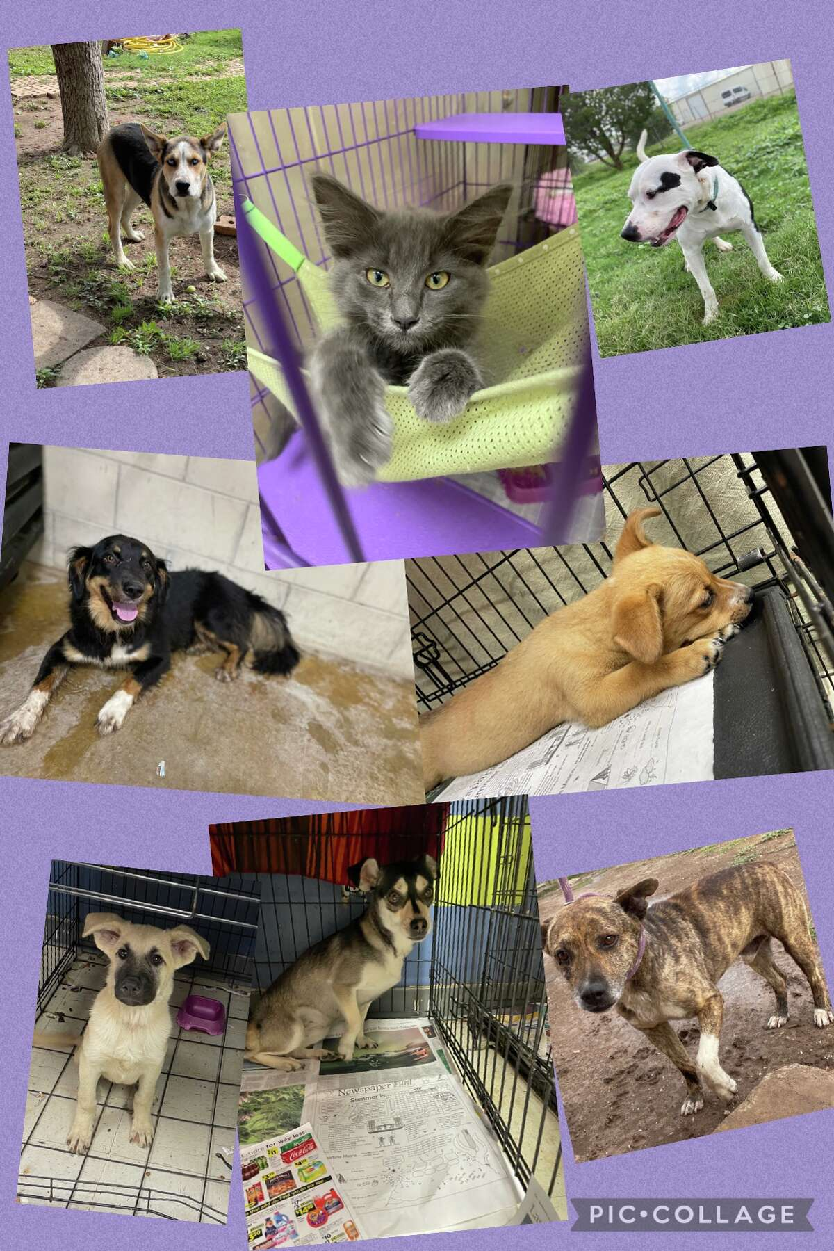 These are a few of the pets up for adoption at Paws Pet Adoption of Plainview