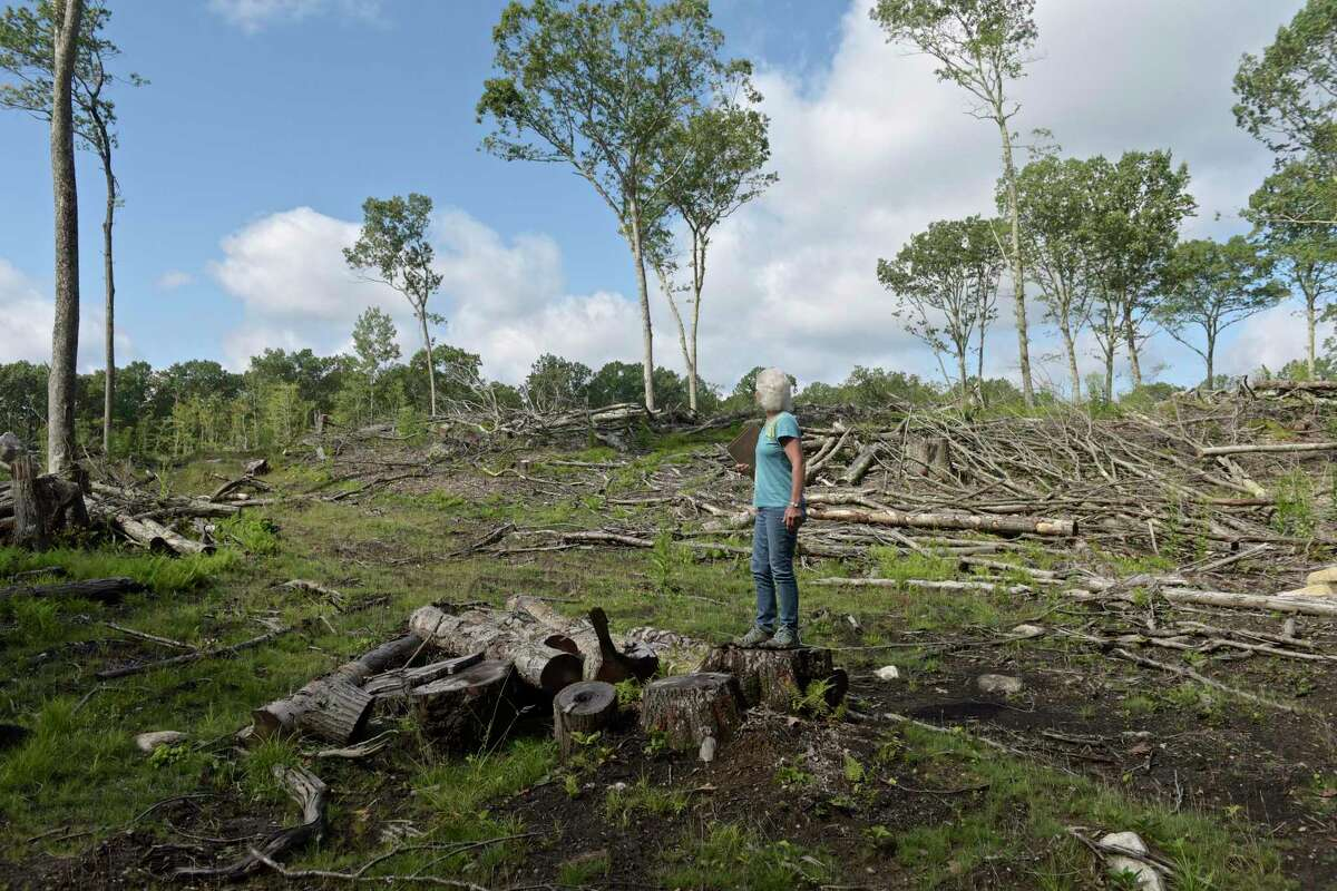 Karlyn Sturmer, a member of the Newtown Conservation Commission, stands in a clear cut section of the 43 acre Stone Bridge Preserve on Thursday. A section of the mature forest was clear cut to let a young forest habitat develop. September 7, 2017, in Newtown, Conn.