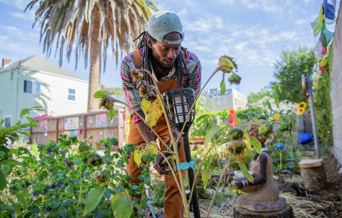 Ezekiel McCarter prunes flowers in a healing garden in West Oakland that his family's nonprofit, the Long Live Love foundation, created to help people cope with traumatic events.