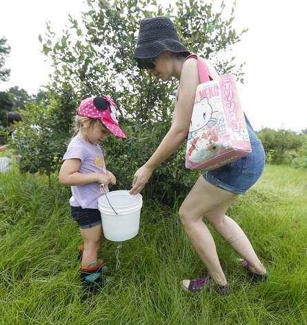Audrey Dautengahn places blueberries in her daughterÕs bucket at Moorhead's Blueberry Farm, Saturday, July 10, 2021, in Conroe. Photo: Jason Fochtman/Staff Photographer / 2021 ? Houston Chronicle