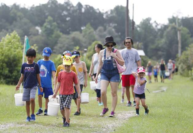 Families bring back their blueberries to be weighed at Moorhead's Blueberry Farm, Saturday, July 10, 2021, in Conroe. Photo: Jason Fochtman/Staff Photographer / 2021 ? Houston Chronicle