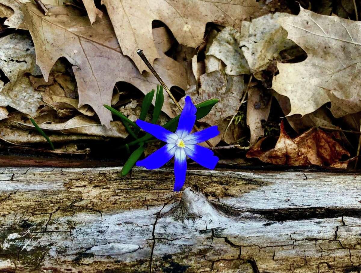 "Stephen Diamond's photograph, ""First Bloom."""