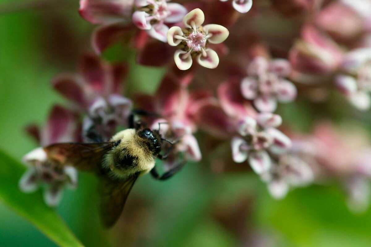 The Environmental Protection Agency will allow farmers to resume broad use of a pesticide over objections from beekeepers.