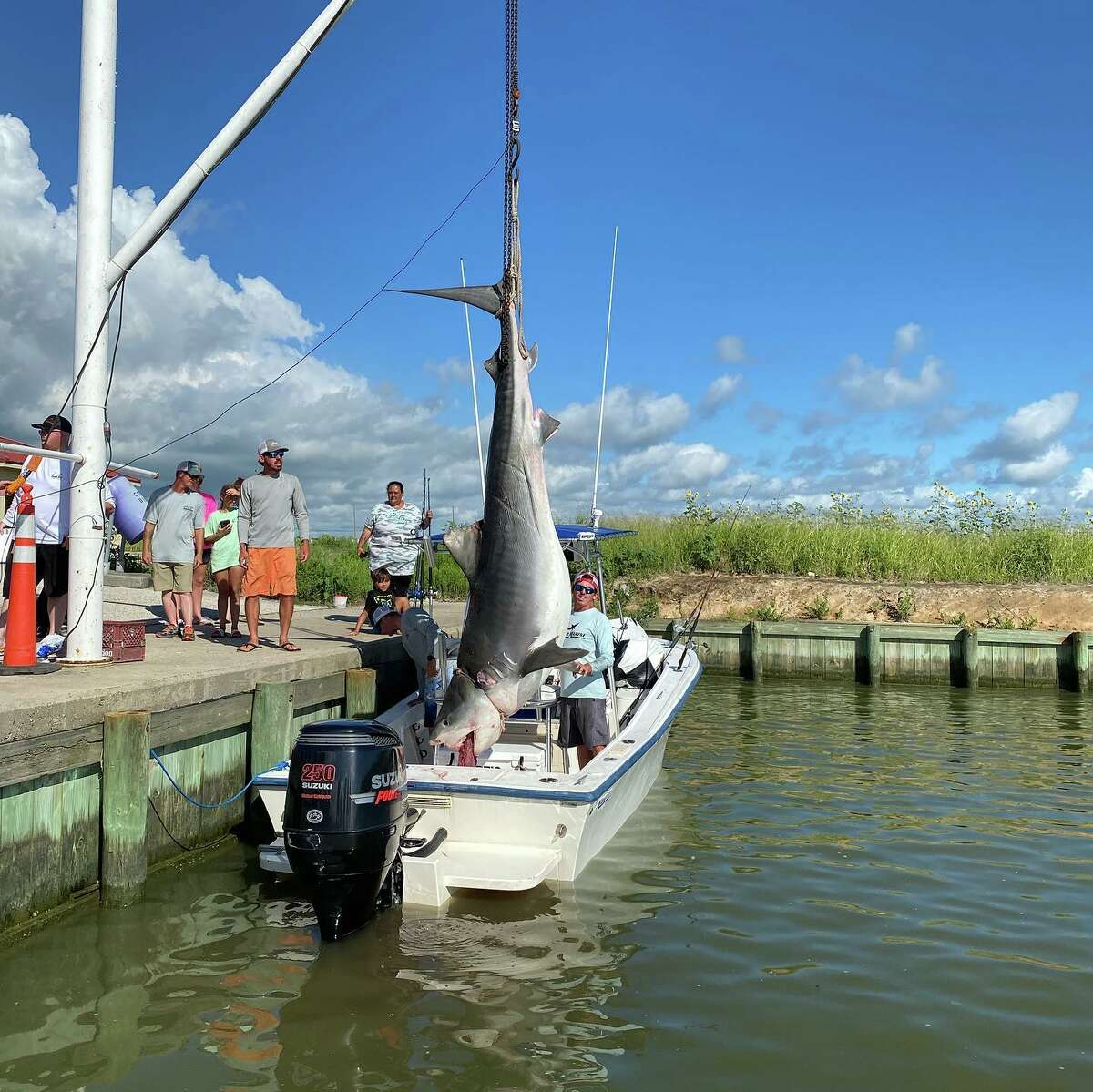 On July 1, Avery Fuller and his two brothers Clint and Tyler were out fishing about 40 miles off the coast of Galveston when he caught a 1,000-pound, 12-foot tiger shark.