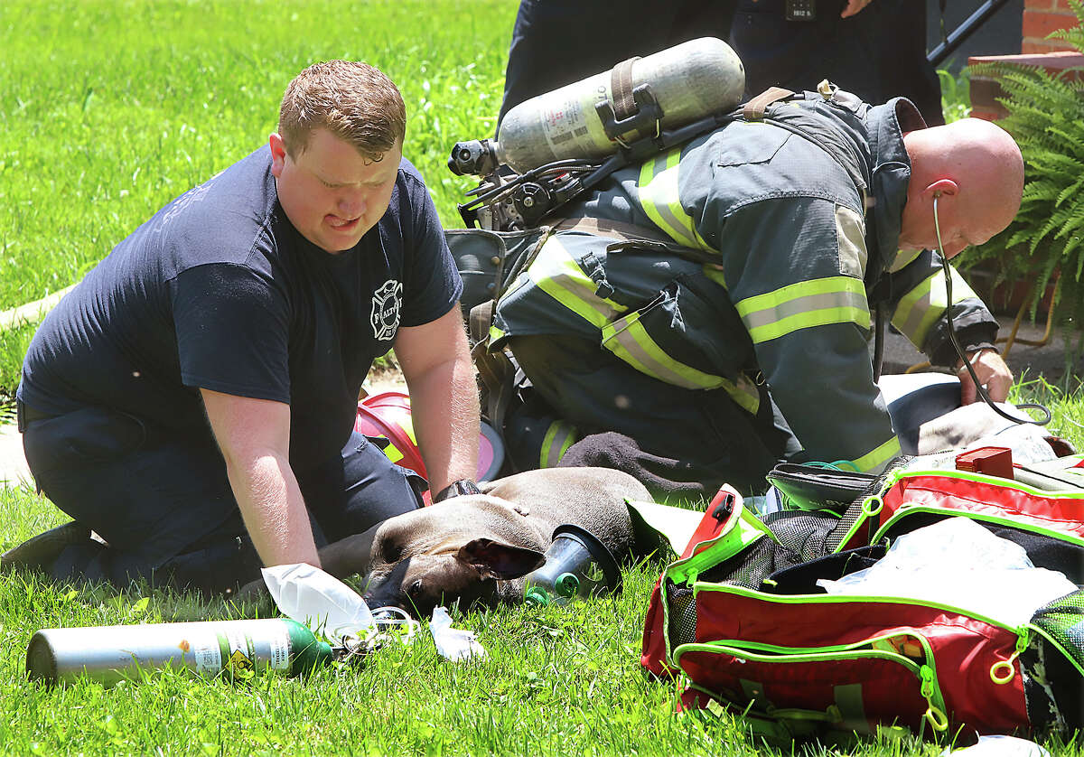 Alton firefighters perform CPR Monday on the front lawn of a house in the 2500 block of Alfaretta in Alton after two women returned to the home to find that there had been a fire and their dogs were unconscious. They had carried the dogs outside and firefighters took over efforts to revive the animals using a special oxygen mask which fits over a dog's muzzle. The fire, apparently from an air fryer on the stove, had burned itself out before fifighters arrived. One of the residents was being treated in a fire department ambulance for smoke inhalation but the two pit bulls could not be revived.