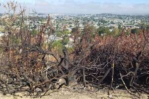 The aftermath of the Swanzy Fire, which led to evacuations in south Vallejo.