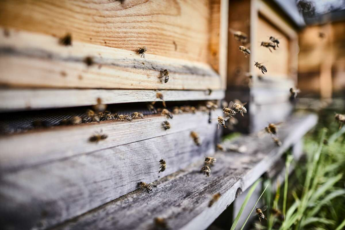 """""""Killer"""" bees result in most of the calls at this San Antonio pest control company."""