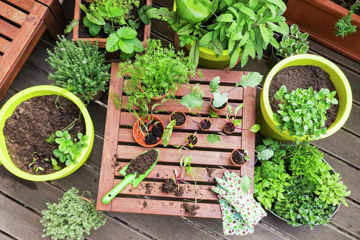 """Northern Pathways Equine Center will hold """"The Beginner's Garden,"""" a class in the basics of organic gardening starting at 6:30 p.m. on July 23 at7889 Lyman RoadinKaleva. (Courtesy photo/Getty Images)"""
