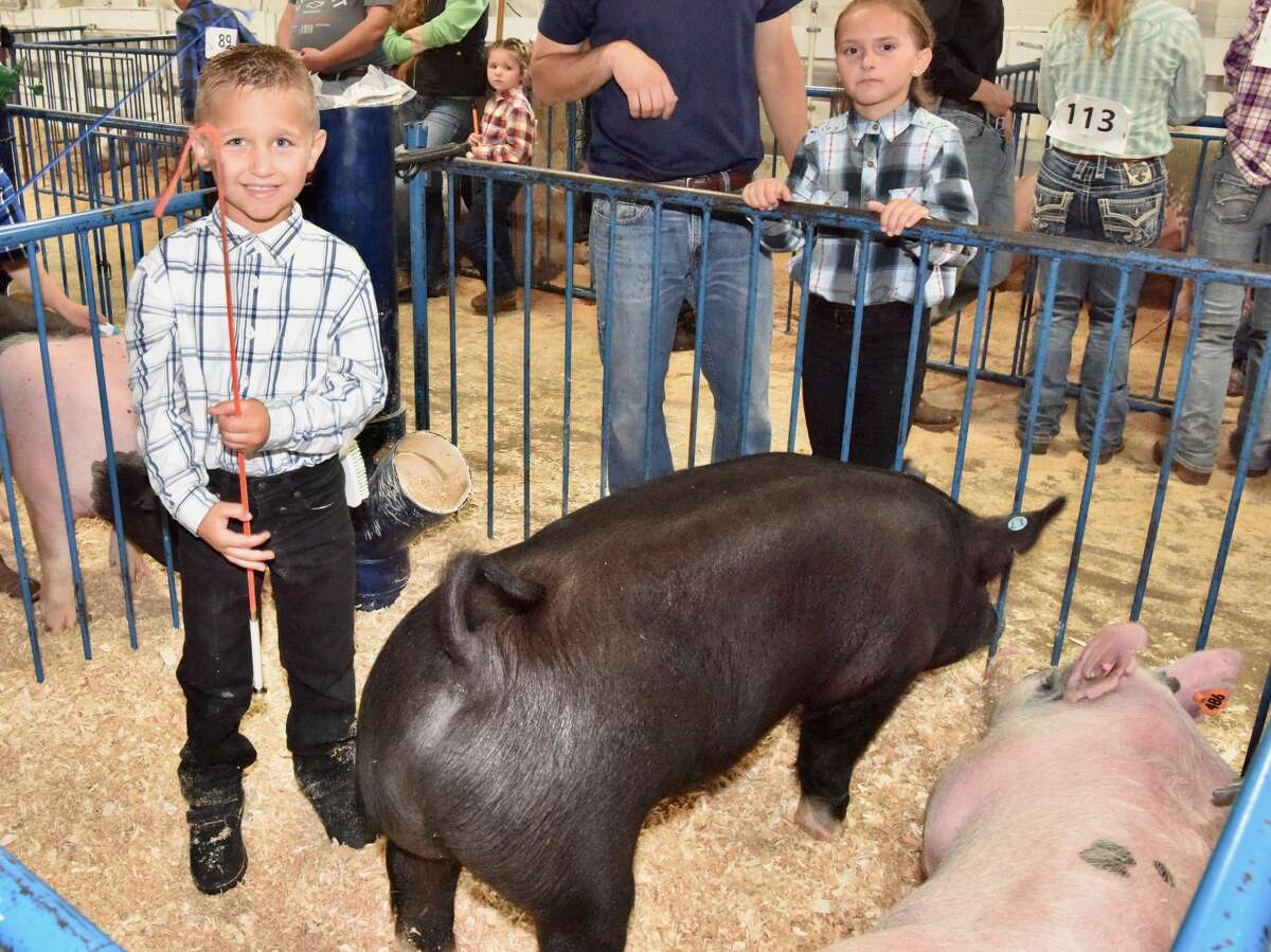 The Mecosta County Fair continued Tuesday with market swine shows.