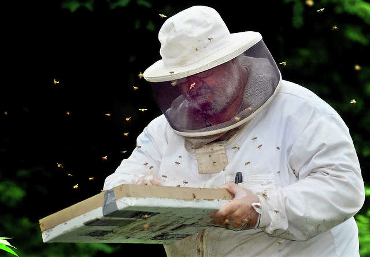 Beekeeper Tom Simpson gathers bees at one of his hives in Edwardsville. Simpson is downsizing his apiary of 80 to 100 hives as he and his wife, Gay, prepare to move to Bull Shoals, Arkansas.