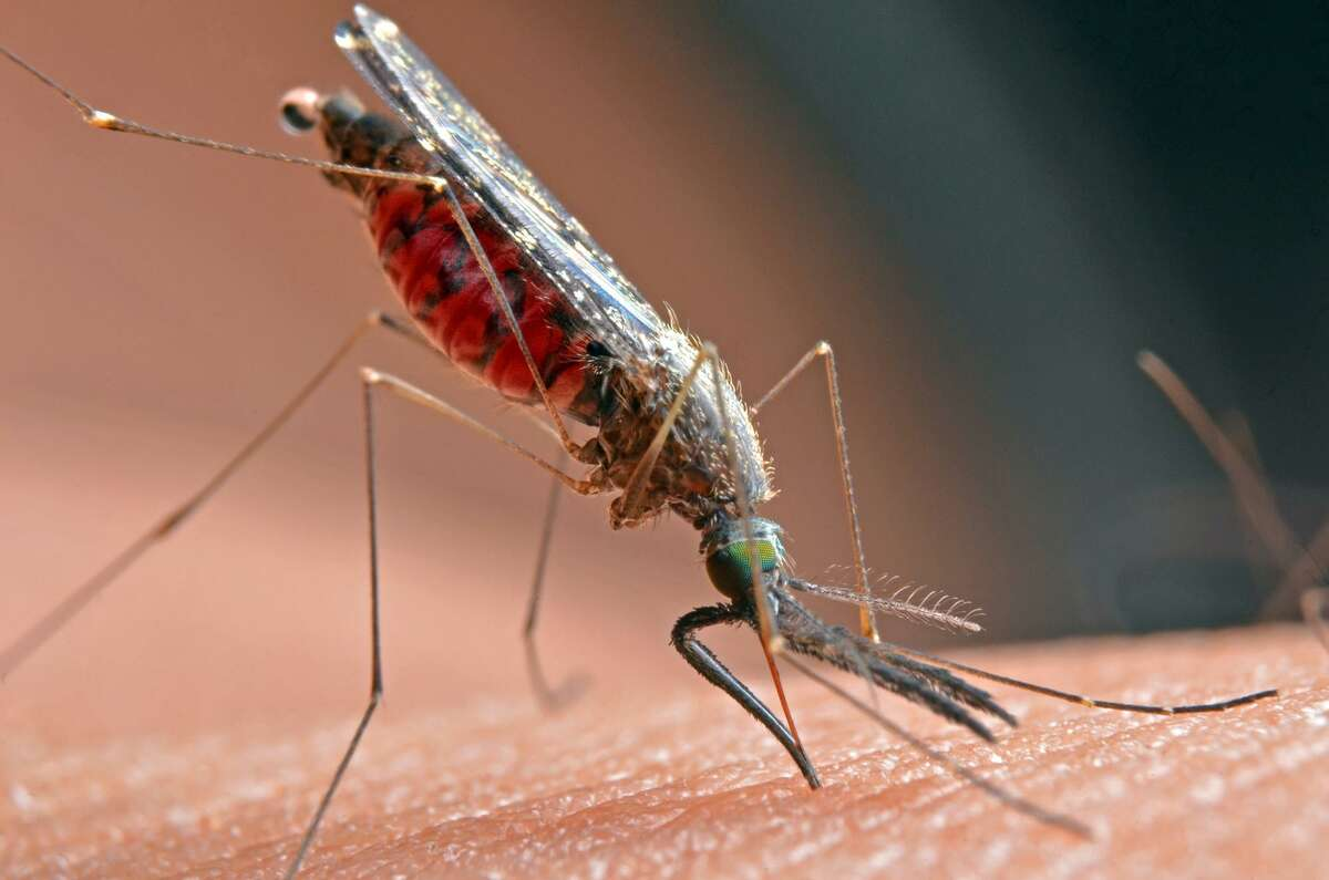 West Nile virus can be transmitted by mosquitoes.