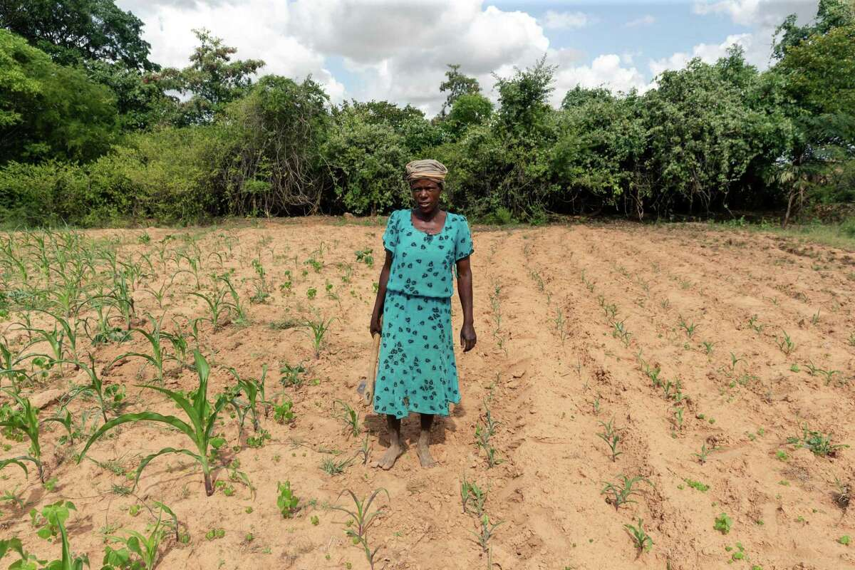 Josephine Ganye works in her wilting and stunted maize fields due to the unrelenting heat and poor rainfall in the drought-prone Buhera, Zimbabwe. Africa, which produces relatively little in the way of greenhouse gases, is seen as one of the areas that will warm the most.
