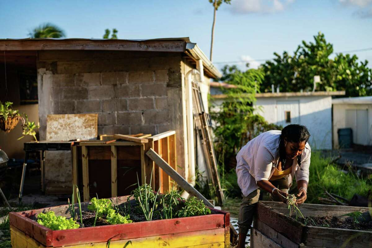 Sonia Rivera, 53, plants green onions in the backyard of her home in the Clifton Hill neighborhood in St. Croix, Virgin Islands, on March 18, 2021.