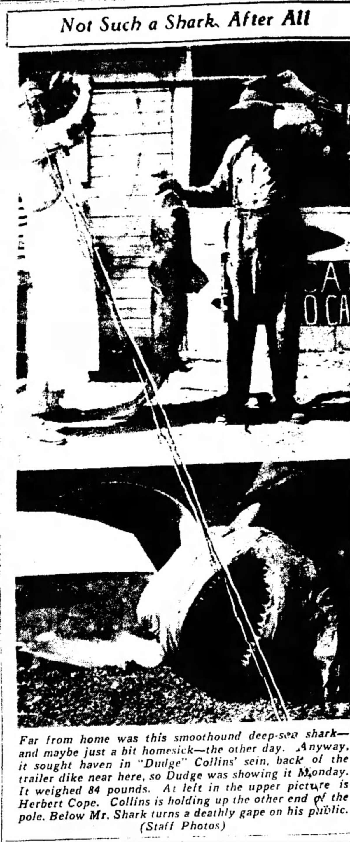 """A clipping of the """"alleged"""" shark from the Sept. 8, 1937 edition of The Telegraph."""