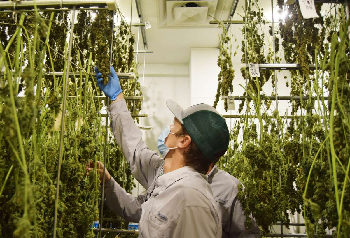 Texas Original Compassion Cultivation in Austin is one of only three in the state allowed to grow cannabis for medicinal purposes.