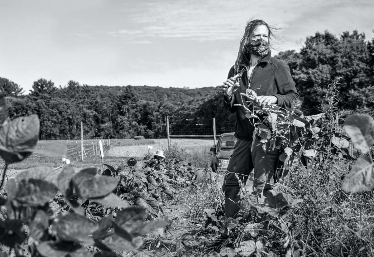 """The art museum, MoCA Westport, and the Westport Farmers' Market are having a photography art exhibit that is titled: """"Between the Ground and the Sky,"""" from Friday, Aug. 27, through Saturday, Sept. 18. Pictured is Local Photographer Anne Burmeister, of Westport's, """"Fort Hill Farm, Milford, CT"""" artwork in the exhibit."""