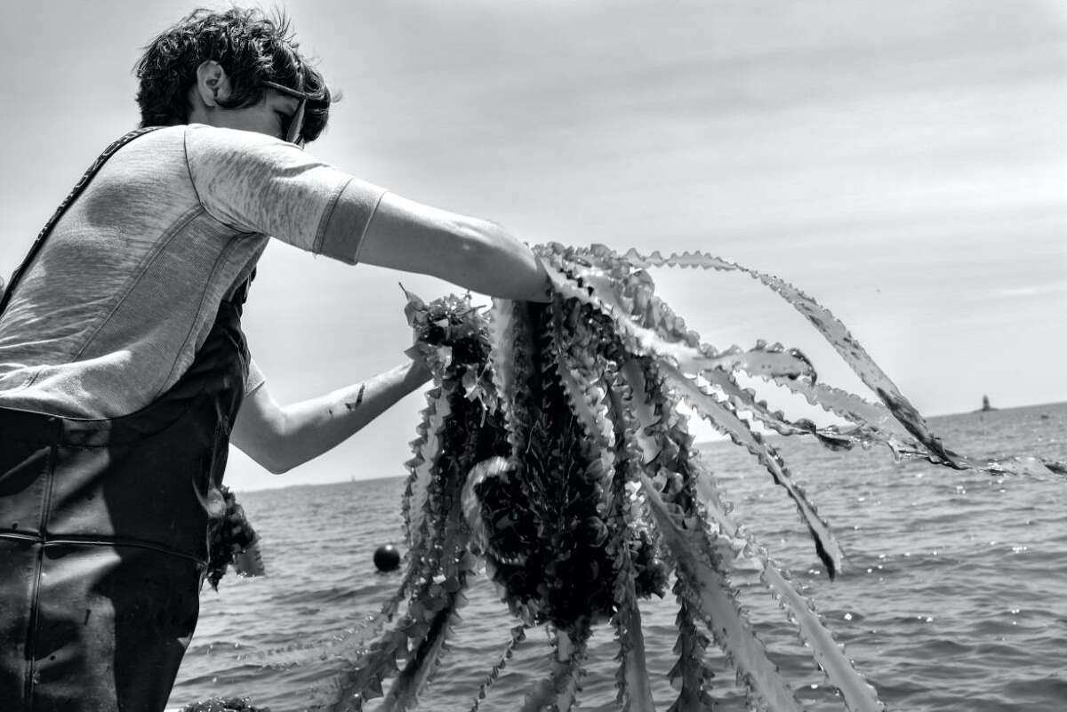 """The art museum, MoCA Westport, and the Westport Farmers' Market are having a photography art exhibit that is titled: """"Between the Ground and the Sky,"""" from Friday, Aug. 27, through Saturday, Sept. 18. Pictured is Local Photographer Ashley Skatoff, of Westport's, """"Stonington Kelp Co., Stonington, CT"""" artwork in the exhibit."""