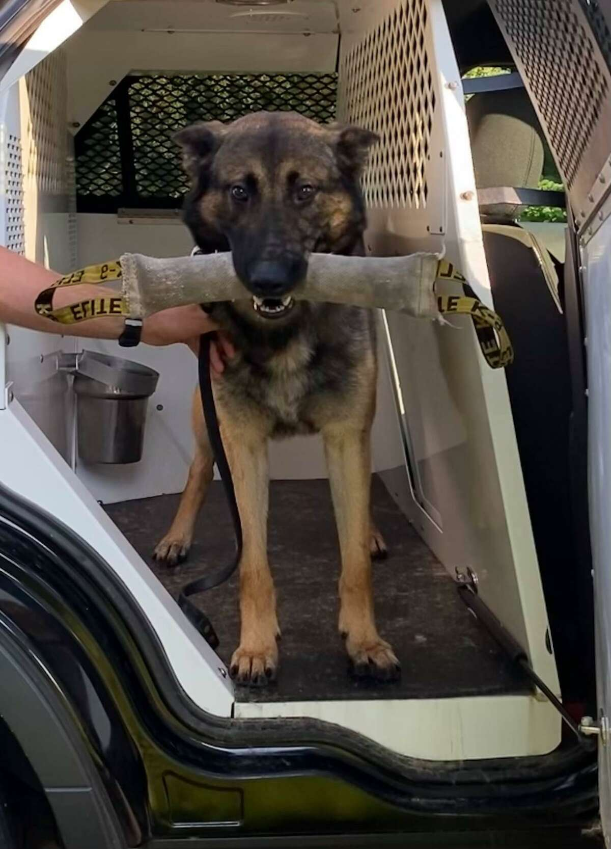 Jax, a German Shepherd and Belgian Malinois mix, is almost 2-years-old. He is one of two police dogs recently added to the Groton, Conn., police force.