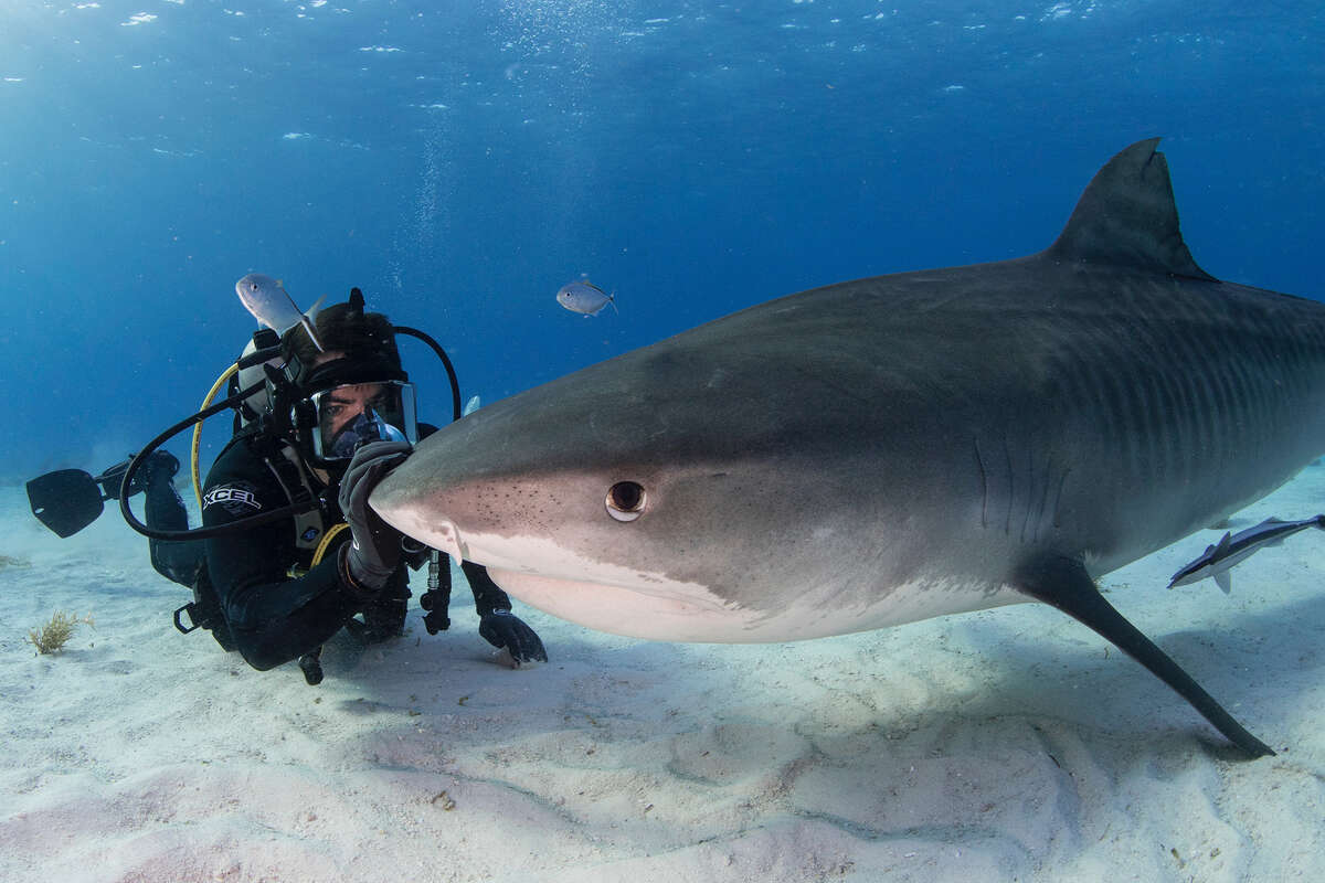 """Eli Roth, right, in the save-the-sharks documentary """"Fin."""""""