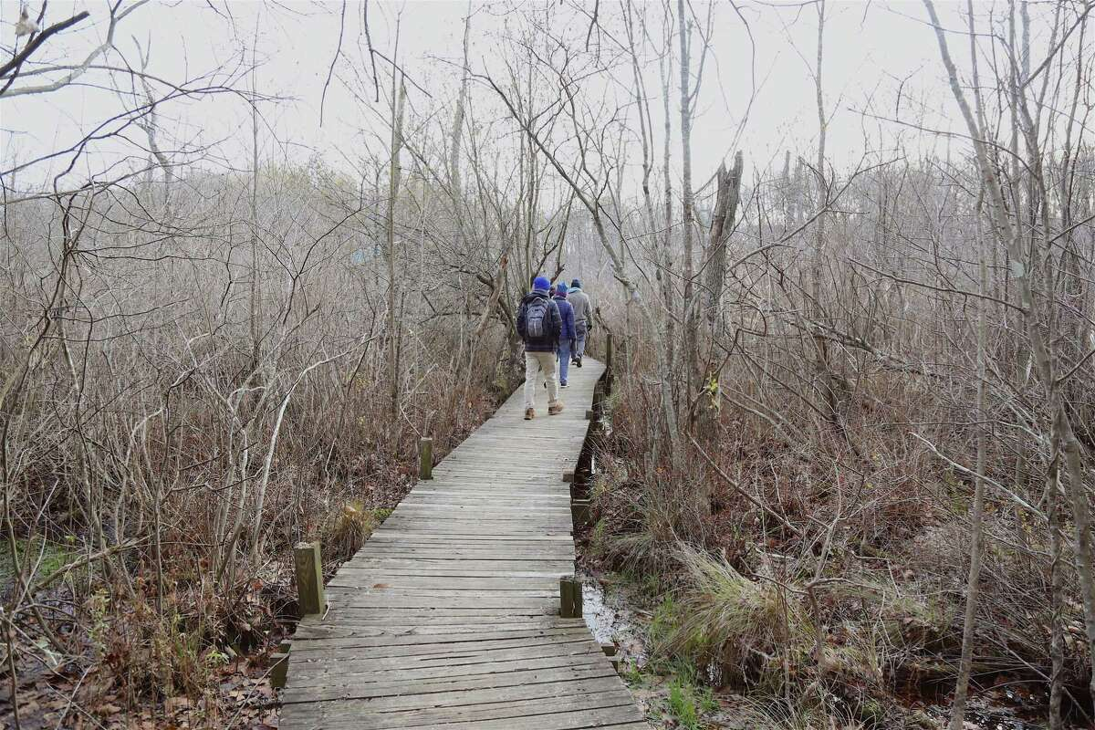 Visitors head out along into a swamp that filters water before it feeds into the Norwalk River, and out to the Long Island Sound, in a previous year. With summer camp now in session through August 20, after beginning June 21, the area near the Woodcock Nature Center's buildings, and pavilion are being used daily by the camps' campers between 9:30 a.m. and 3 p.m. in Wilton.