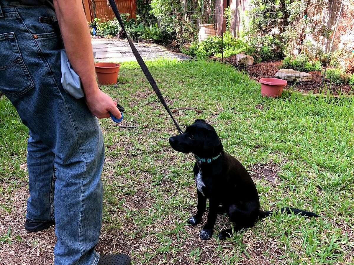 Michael Crocken is clicker training his new puppy, Molé.