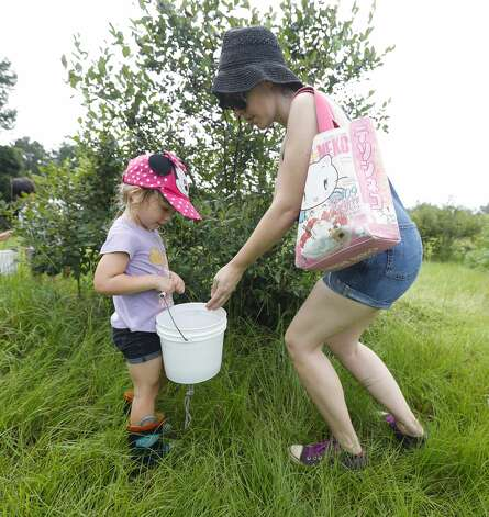 Audrey Dautengahn places blueberries in her daughter's bucket at Moorhead's Blueberry Farm, Saturday, July 10, 2021, in Conroe. Photo: Jason Fochtman/Staff Photographer / 2021 © Houston Chronicle