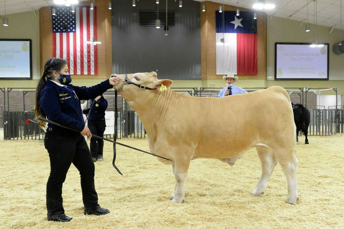 Bella Torres shows her steer during the 78th Annual Katy ISD FFA Livestock Show on Feb. 25.
