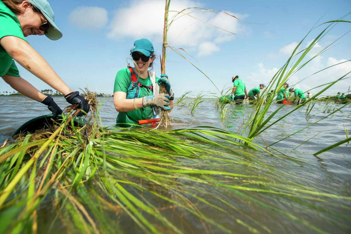 Aramco lab technician Jennifer Rodriguez, left, and lab scientist Stacy Althaus laugh as the water gets deeper as they plant marsh grass on Galveston Island with a group of volunteers from Aramco in June 23, 2021. The Galveston Bay Foundation has been working to expand the marsh area in Galveston Bay along their property on Sweetwater Lake.