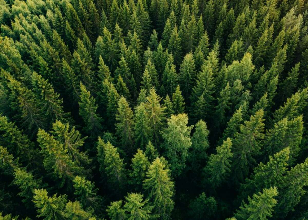 #9. Timber - Total return in 2021: 16.8% - Market capitalization: $37.8 billion Framing lumber prices jumped a record-setting 250% during the pandemic. Now it seems that timber prices are following suit. However, meeting challenges to keep up with demand can lead to volatility in this sector-prices are already weak in parts of the country-so experts suggest it as a long-term investment tool. Vertically integrated companies like Weyerhaeuser, that are also involved with lumber production, fare better through ebbs and flows than companies solely focused on timberland. The sector has seen positive returns throughout the pandemic.
