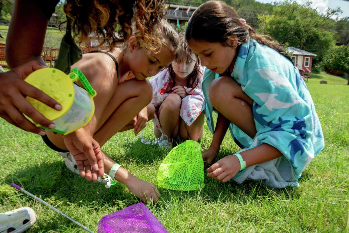 Campers at YMCA Camp Flaming Arrow in Hunt scour the lawn for grasshoppers to feed to the camp's lizards.