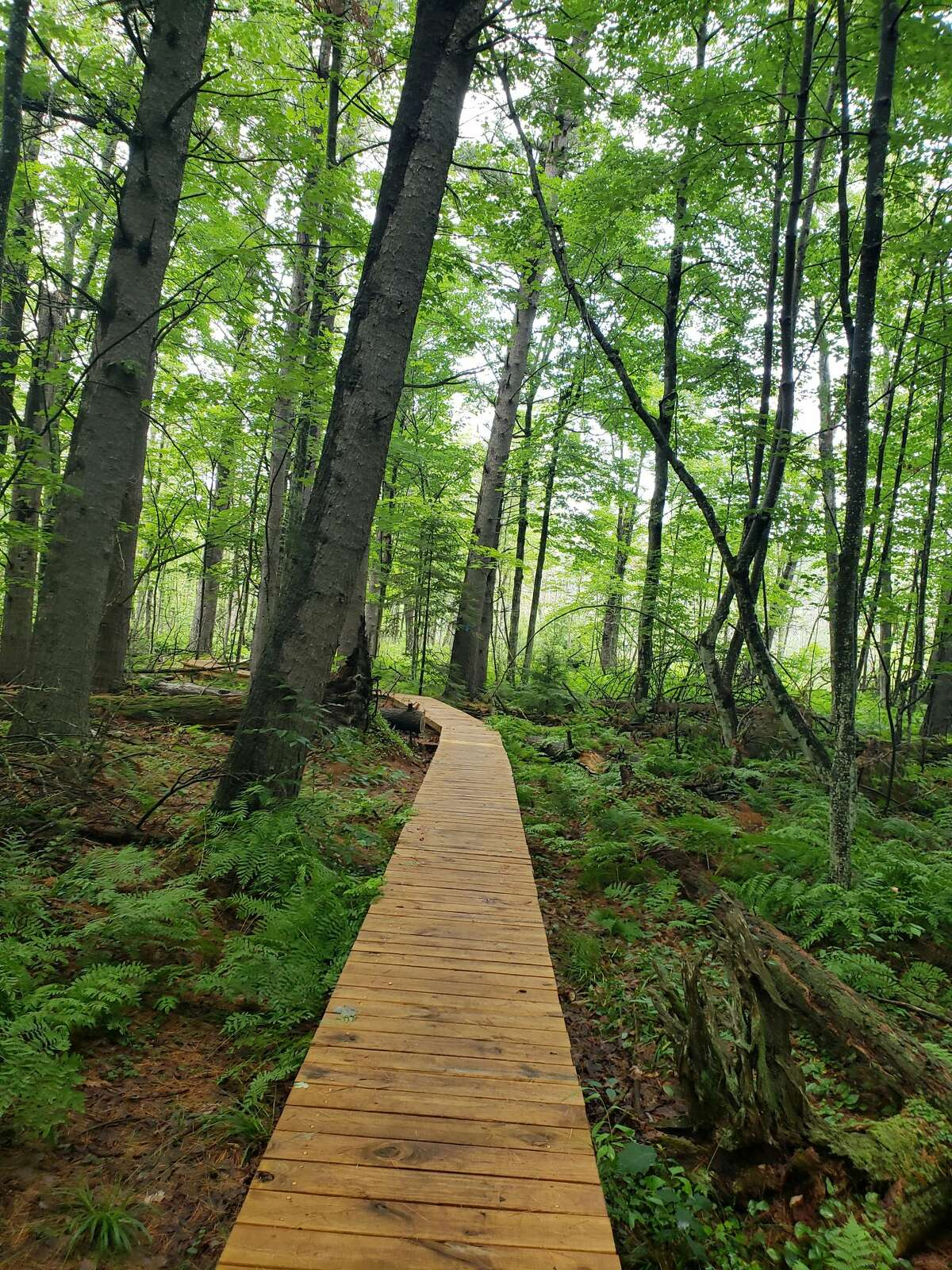 Last week, Arielle Breen went around the Leelanau Peninsula, Suttons Bay and other places going from hiking spot to natural areas like the Kehl Lake Natural Area taking photos in between the plumes of biting mosquitoes.