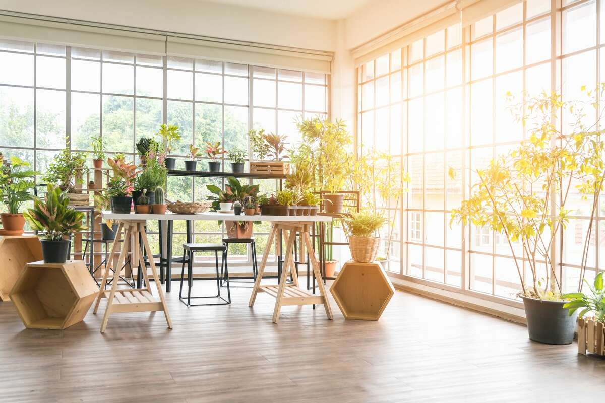An indoor garden like this one requires great natural light as well as time and attention.