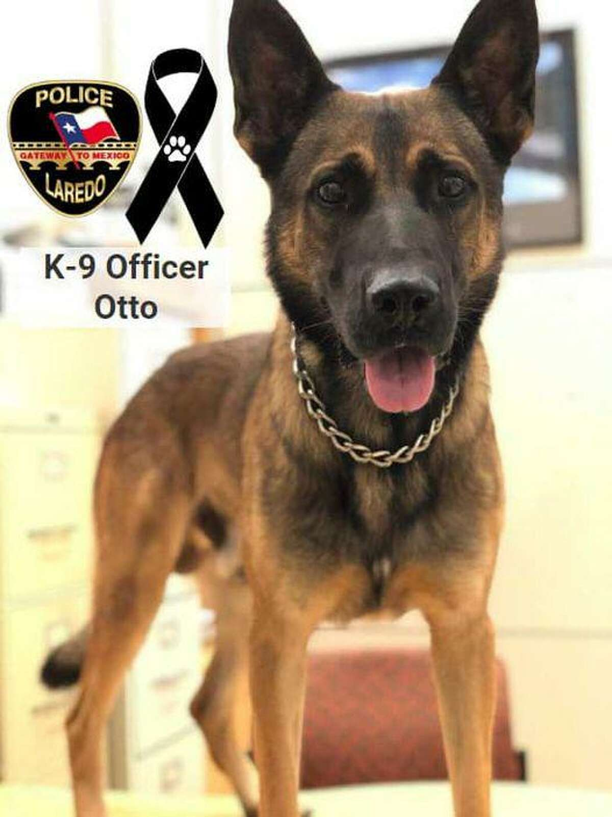 Laredo police announced on Thursday the death of Otto, one of its canine officers.
