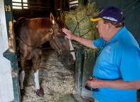 Made a visit to one of the most popular horses in training Thursday morning. That would be the 8-year-old Whitmore, who has won 15 of 41 career starts and is the defending champion of the Breeders' Cup Sprint. Whitmore was a little cranky but purred like a kitten after he got a few peppermints, supplied by Laura Moquette, the assistant trainer to her husband, Ron. Thanks to Skip Dickstein for the photo and thanks to Whitmore for putting up with me. --Tim Wilkin