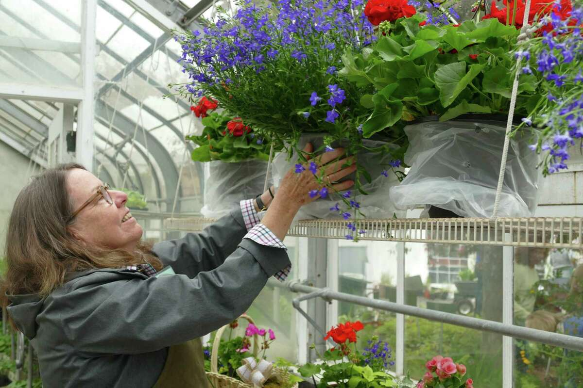 Ridgefield resident Cathy Prior died on June 8 following a colon cancer diagnosis in April. She was a member of the Caudatowa Garden Club. Pictured, Prior arranges plants inside the Ballard Greenhouse during the annual Ballard Garden Plant Sale.
