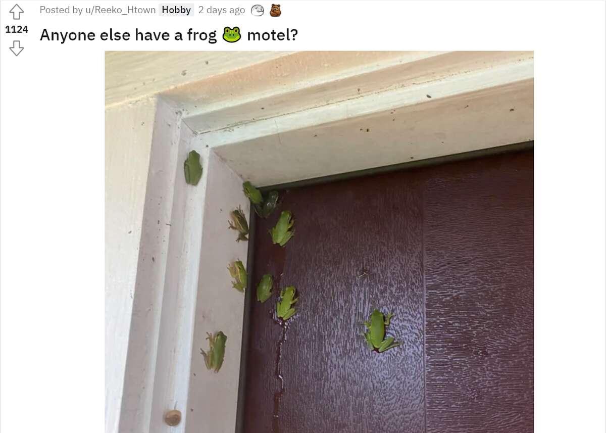 A recent Reddit post showed 10 tree frogs hugging a door in Houston.