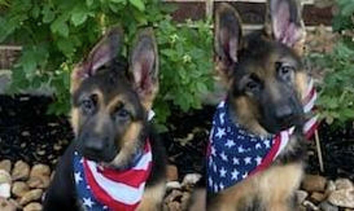 The Rescue for PTSD helps train shelter dogs to be service animals for veterans with PTSD.