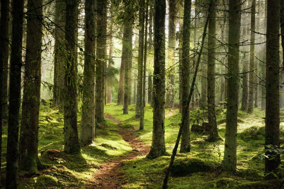 The Leelanau Conservation District is joining with Women Owning Woodlands to host a hike through a woman-owned forest property in Maple City. (Courtesy Photo/Getty Images)