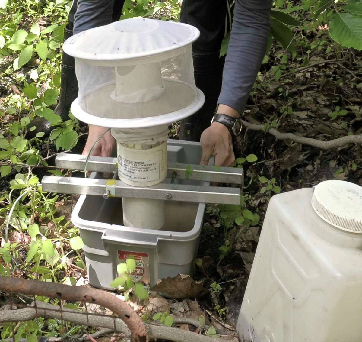 Carlos Franco, a Field Research Assistant with the Connecticut Agriculture Station in New Haven, was at Meckauer Park, in Bethel, Conn, on Wednesday, June 3, 2015 to set mosquito traps to test mosquitoes for west nile virus and other diseases. Franco is setting up a gravid trap, one of two types he put in the park.