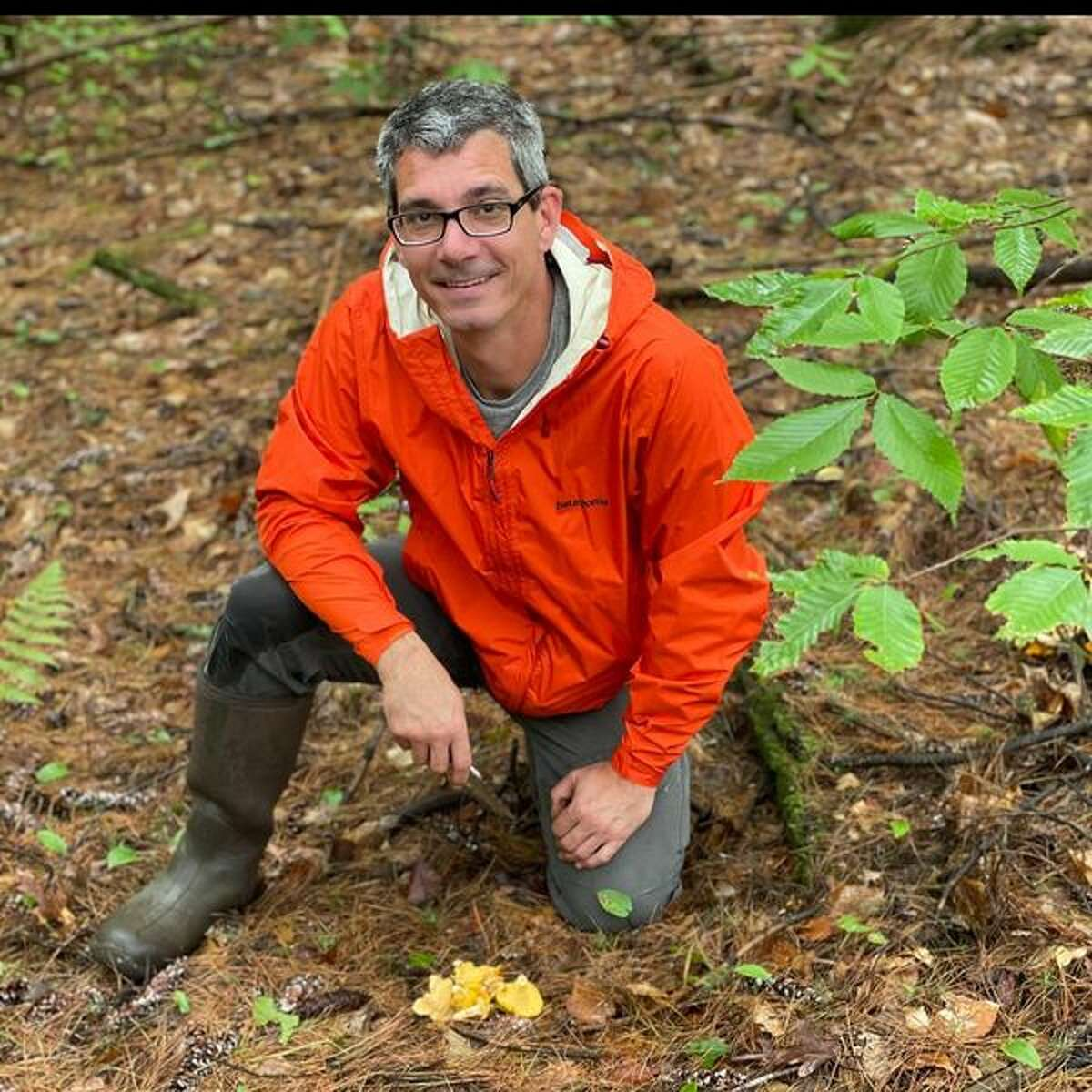 Brian Bowden, executive chef at Radici Kitchen & Bar in Glens Falls, is in the forest foraging for chanterelle mushrooms.