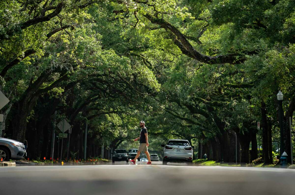 """A pedestrian crosses underneath the oak trees lining Rice Boulevard near Rice University, Tuesday, July 20, 2021, in Houston. A new report by the organization American Forests addressed """"tree equity"""" in the nation's cities. The study finds tree inequity in basically every city, including Houston, grounded in historical redlining policies."""