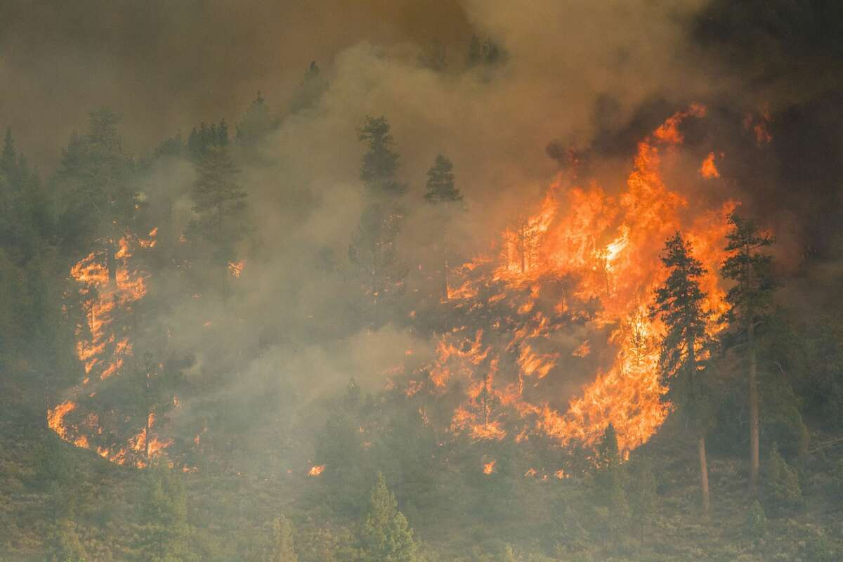 Fire engulfs trees at the Tamarack Fire south of Lake Tahoe.