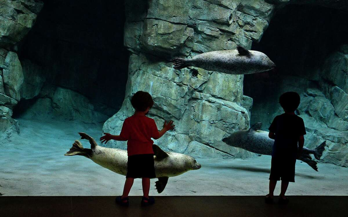 Visitors to the Maritime Aquarium including Leo and Maxwell Brenner, 4 and 6, watch the seals frolic in their new enclosure Tuesday, June 8, 2021, in Norwalk, Conn.