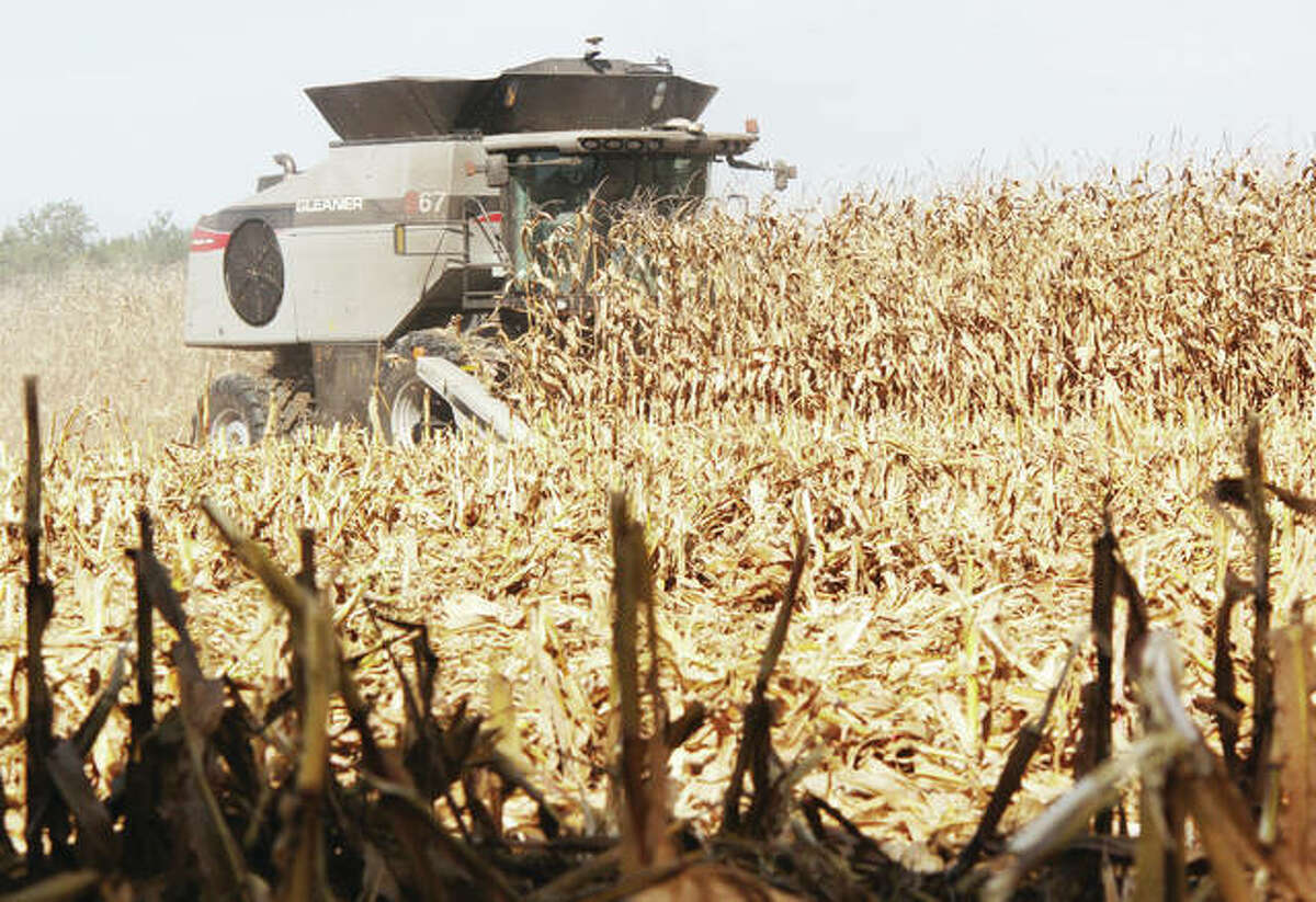 A combine cuts through a field of corn near St. James Road north of Edwardsville in October. University of Chicago professor Chuan He said his success in boosting rice and potato production by 50% could translate into higher yields for Illinois corn and soybean farmers.